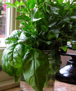 BUONA IDEA! (Good Idea!): How to Keep Fresh Basil and Parsley in Your Kitchen Year Round
