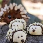 Baby Hedgehog Cookies…Almost Too Cute to Eat!