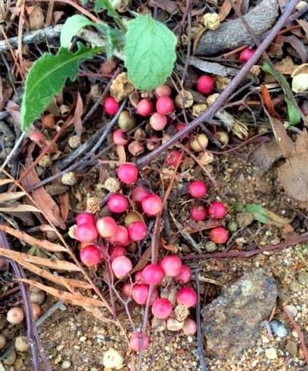 pepper berries tree nut allergy allergen