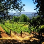A Fabulous Day Trip from San Francisco to Experience The Napa Valley Wine Train