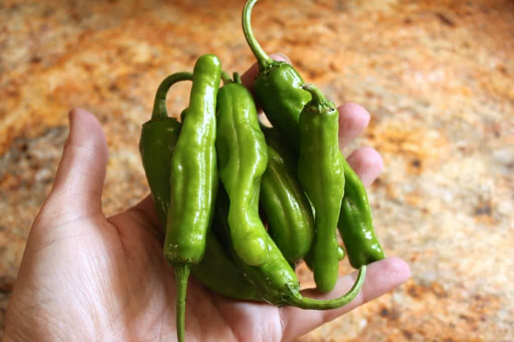 handful of shishito peppers