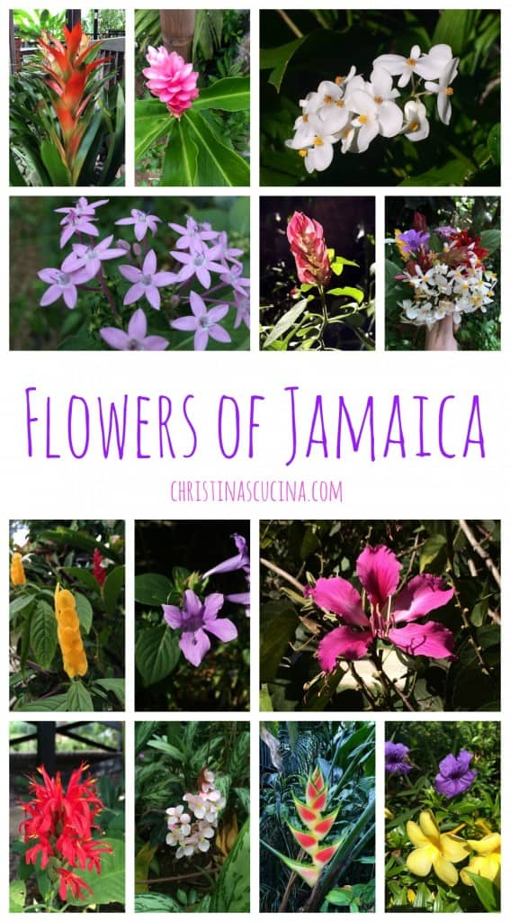 Flowers of Jamaica