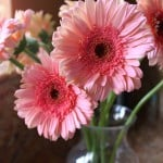 How to Revive Gerbera Daisies