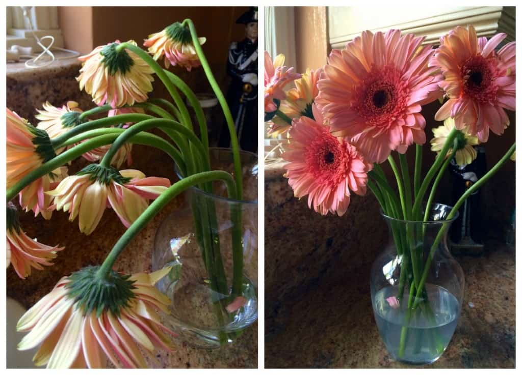 droopy flowers before and after