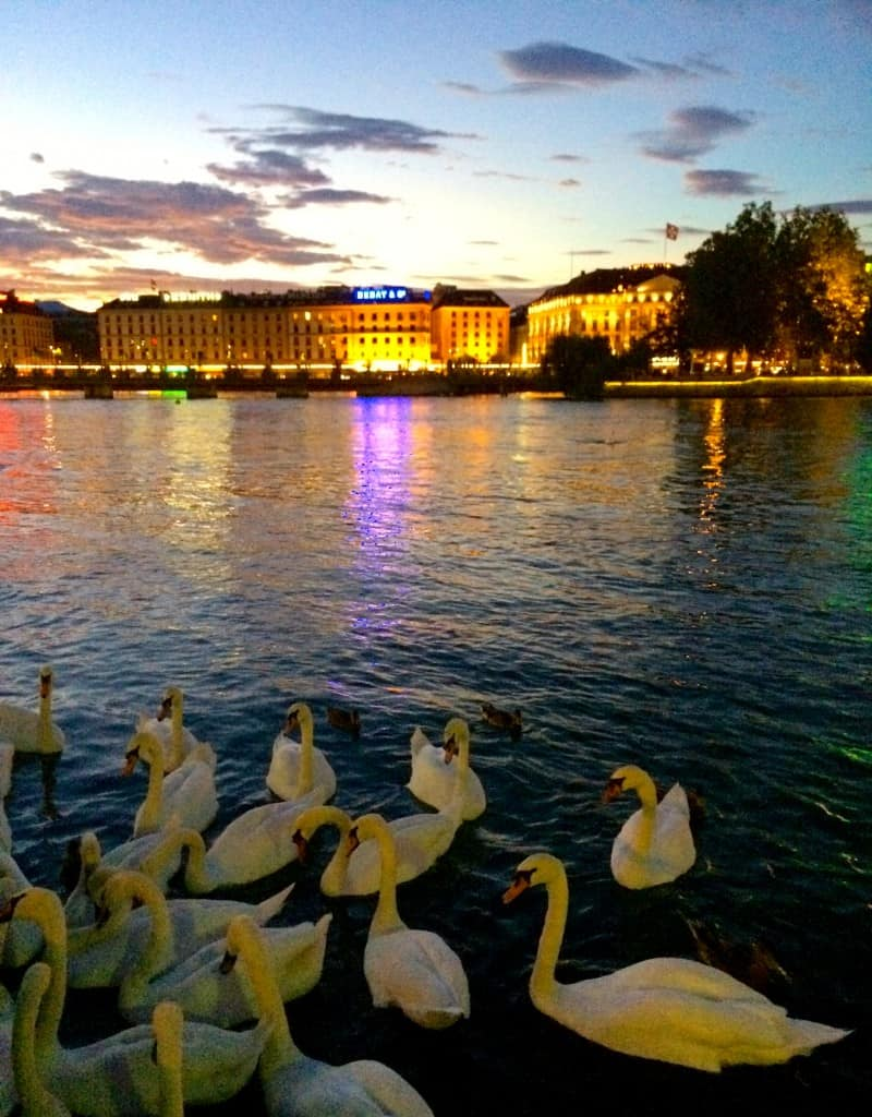 Swans and lights on Lake Geneva