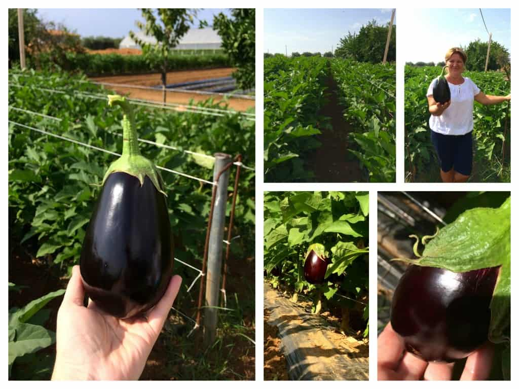 Eggplants in Italy