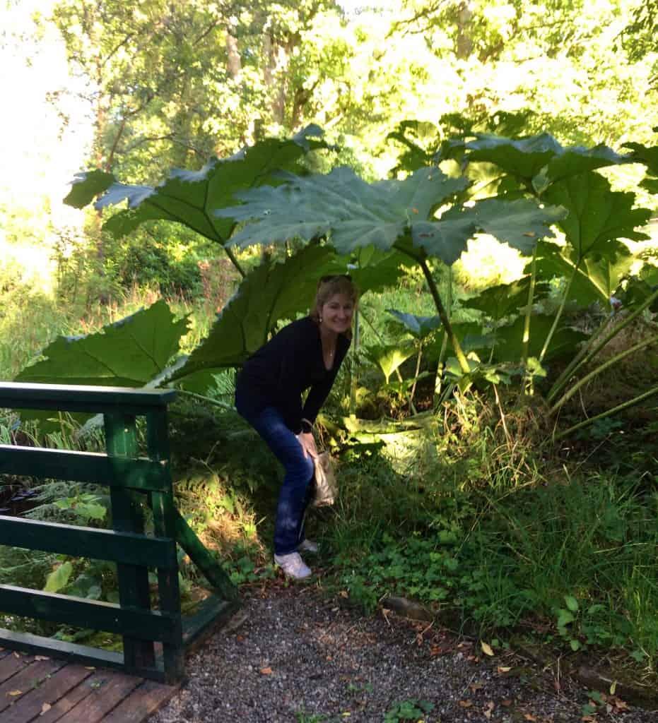 Geilston Garden, under the leaves!