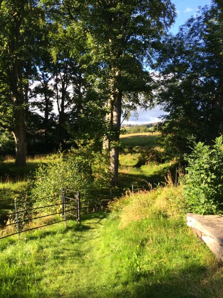 Trail through Geilston Garden
