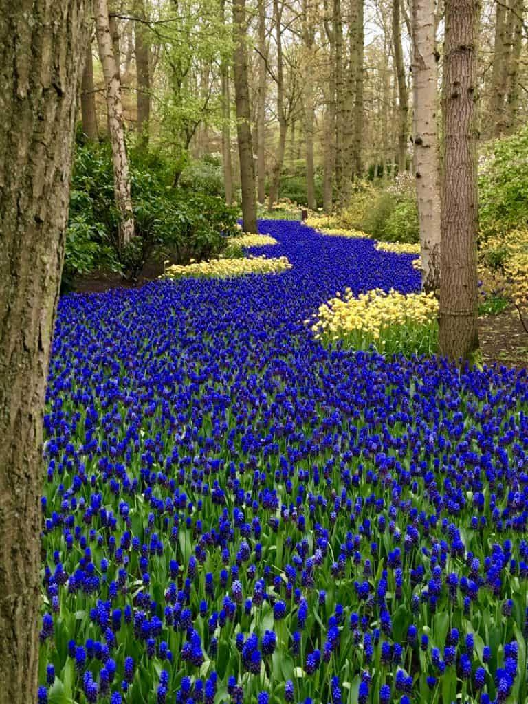Keukenhof Garden, Netherlands