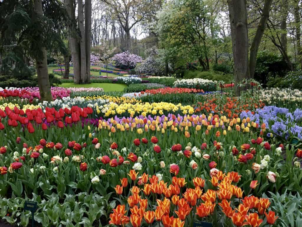 Keukenhof Garden, Netherlands AmaWaterways Enchanting Rhine River cruise