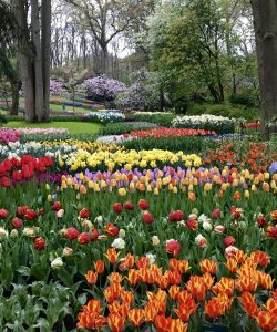 AmaWaterways Enchanting Rhine River Cruise: Day 1 & 2 – Amsterdam and Keukenhof Garden