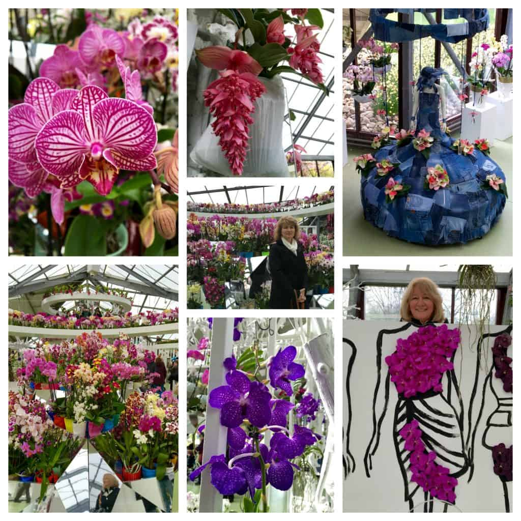 orchids at Keukenhof