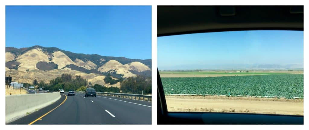 driving in California (Andy Boy rapini field)