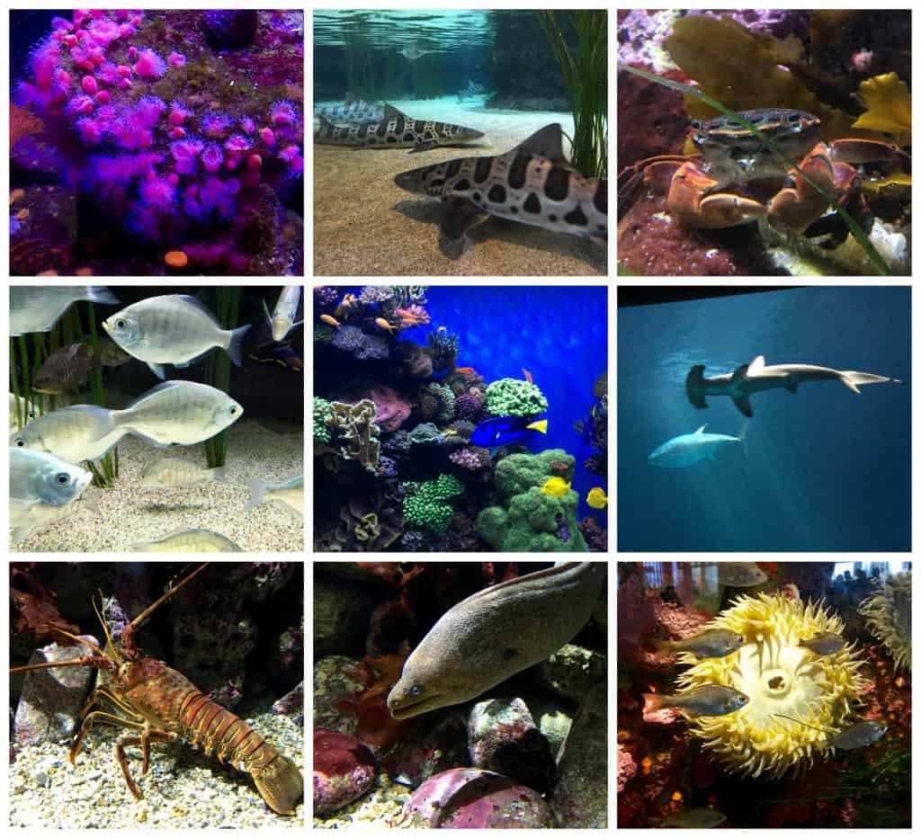 Aquarium collage (Monterey)