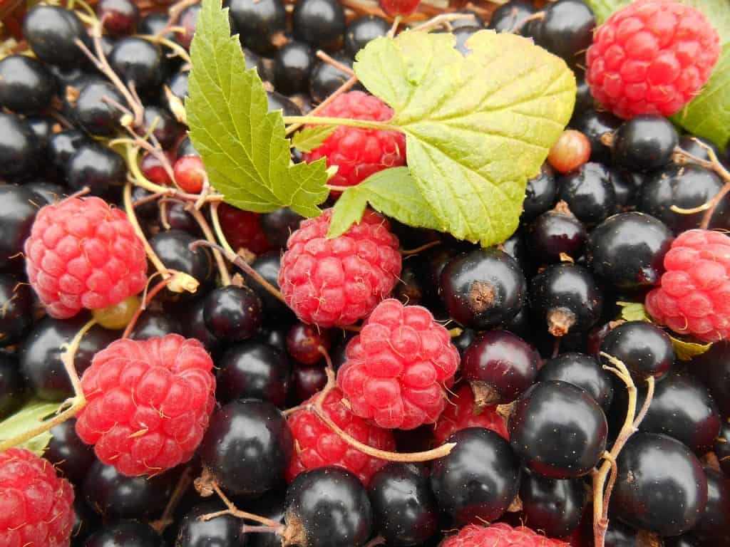 Blackcurrants and raspberries
