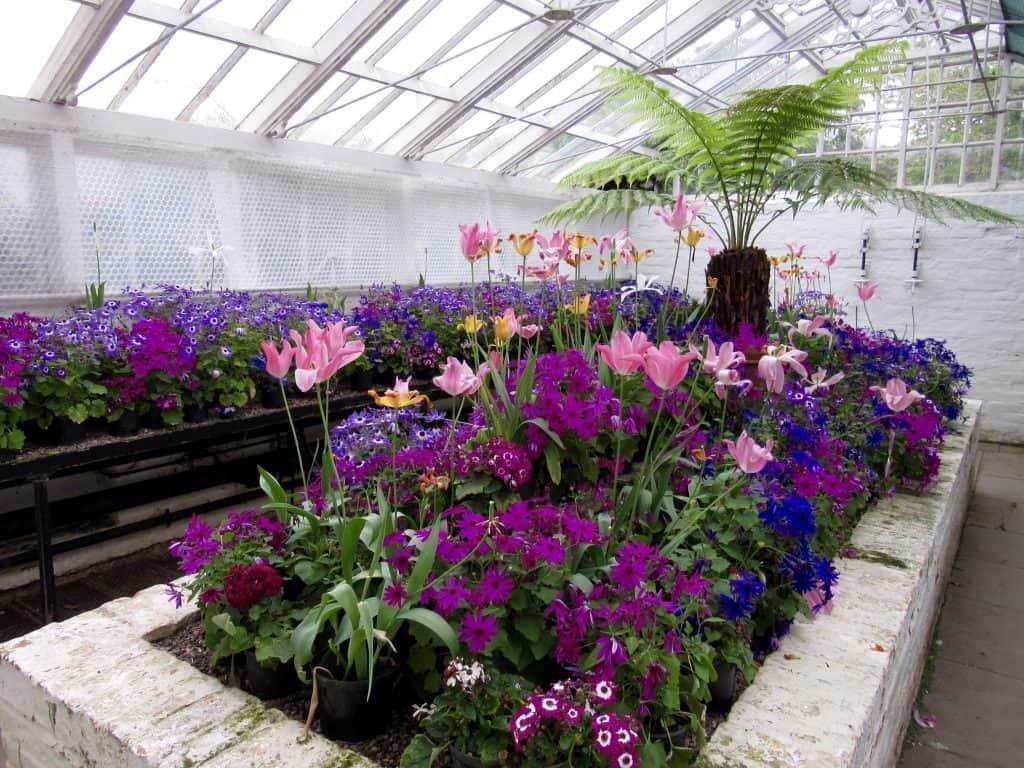 Tatton Park Greenhouse