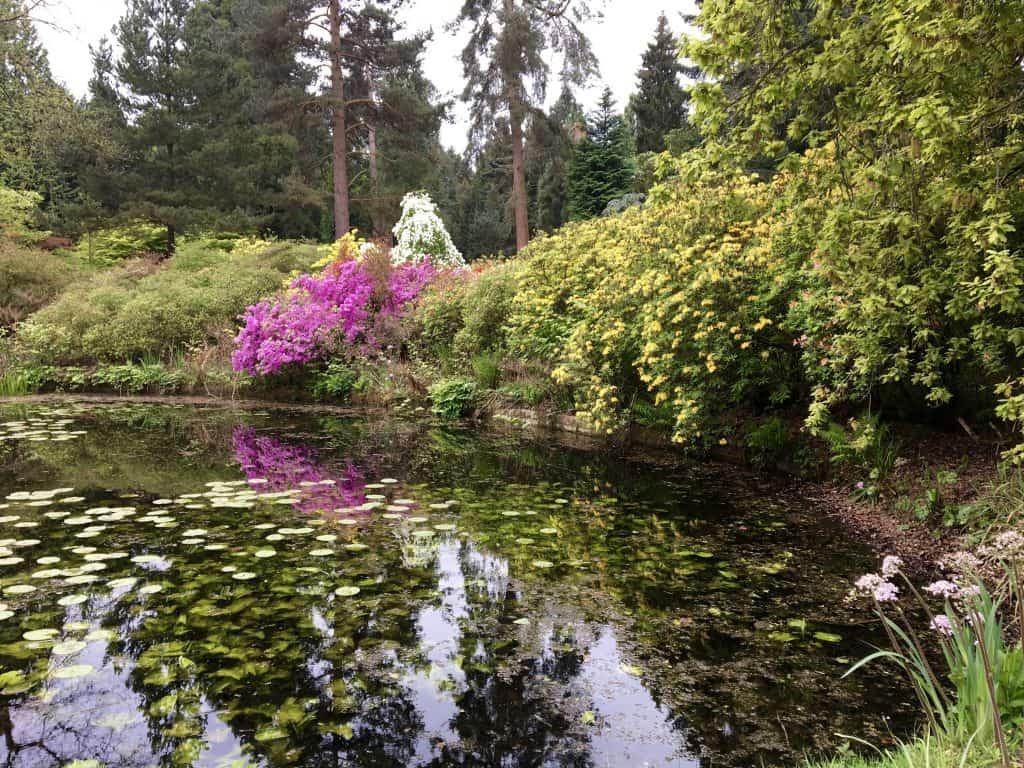 Pond in Tatton Park