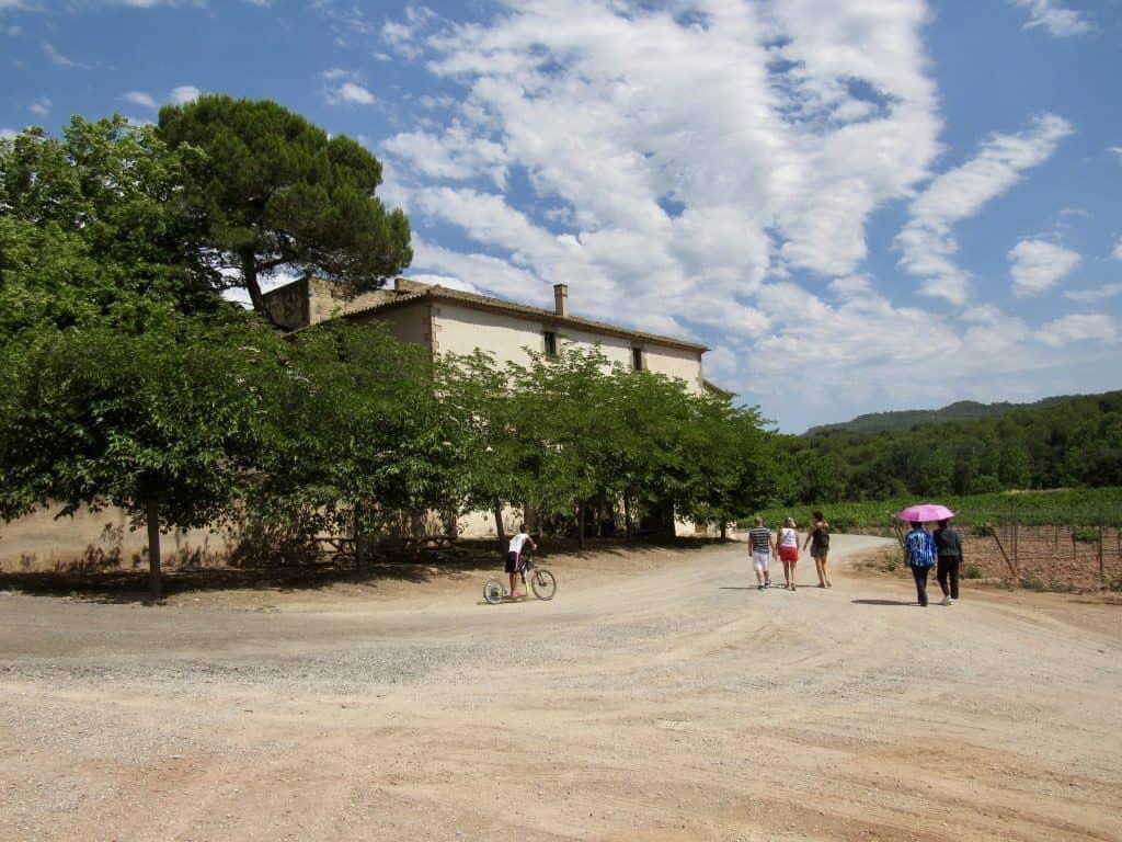 Oller Del Mas Vineyard
