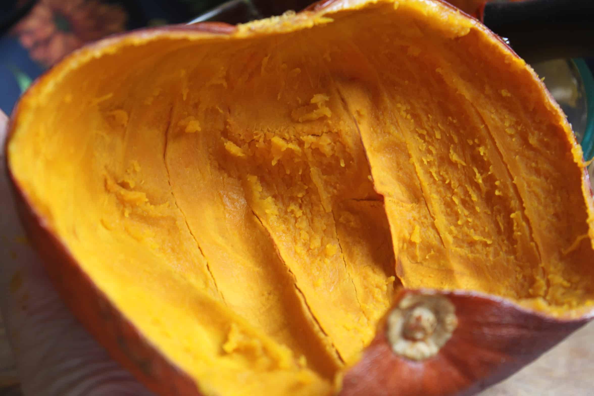 shell of a pumpkin