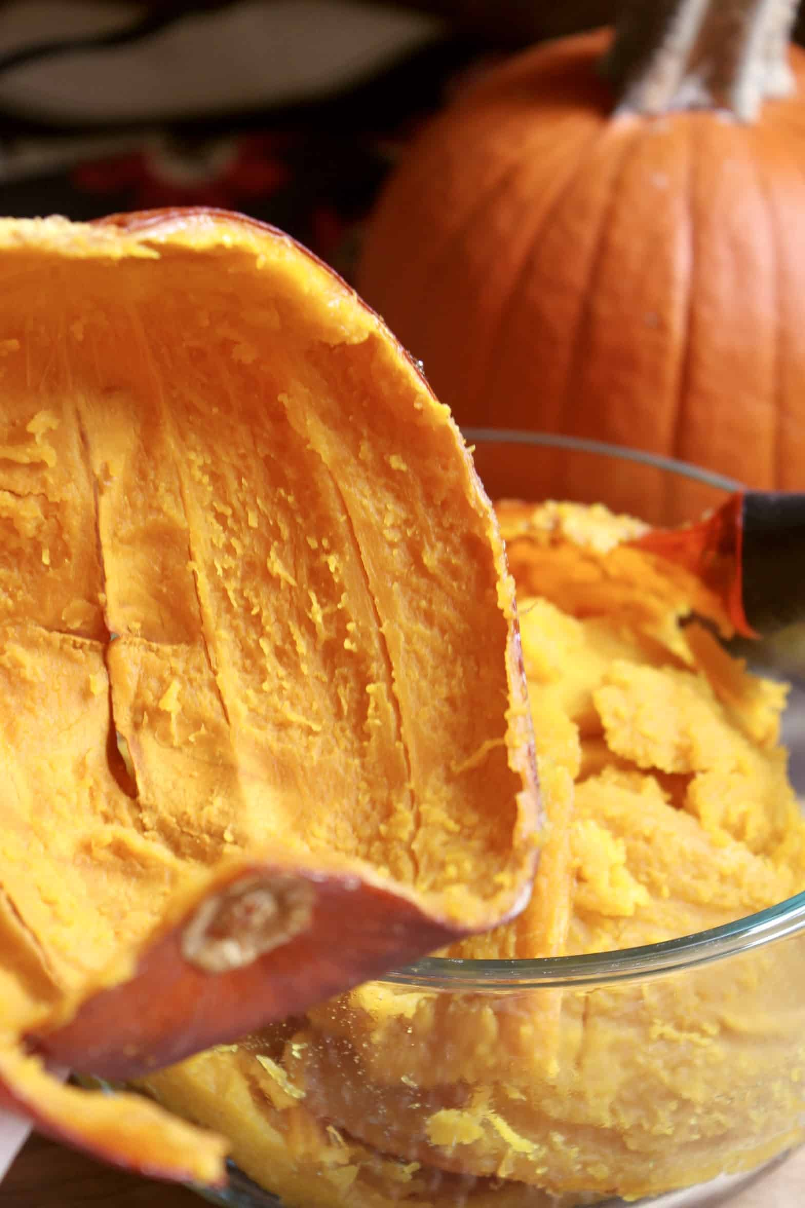 pumpkin shell with pumpkin in background