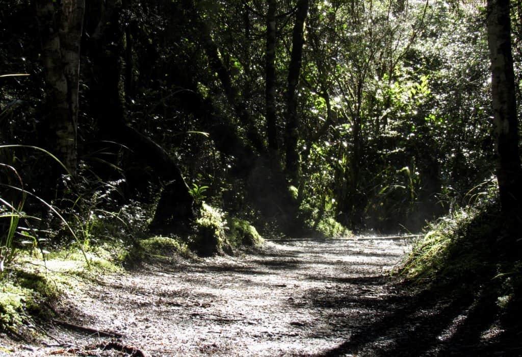 Taranaki Falls Loop walk