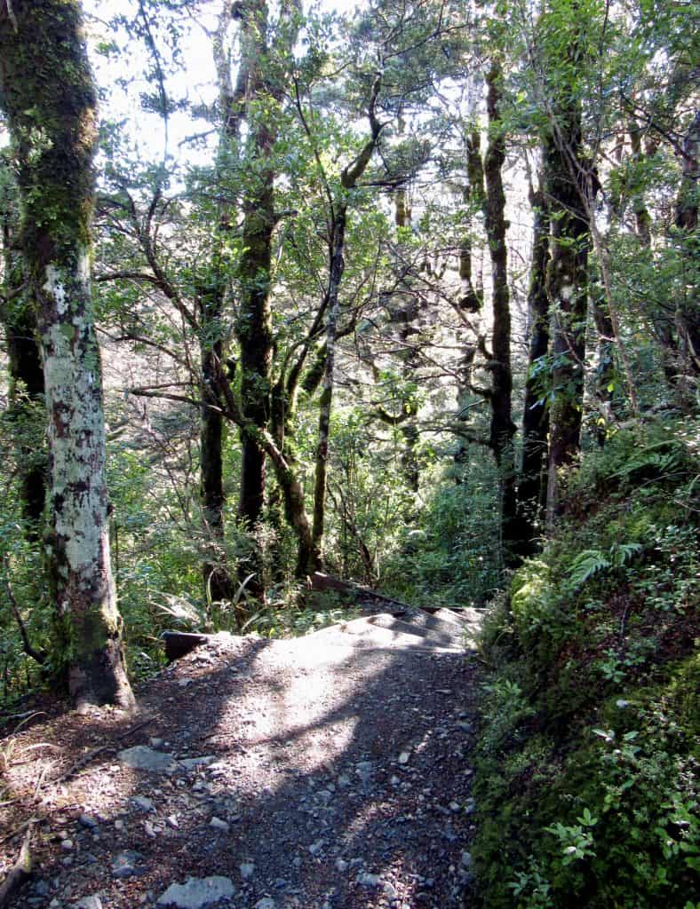 Forest walk in Taranaki Falls Loop
