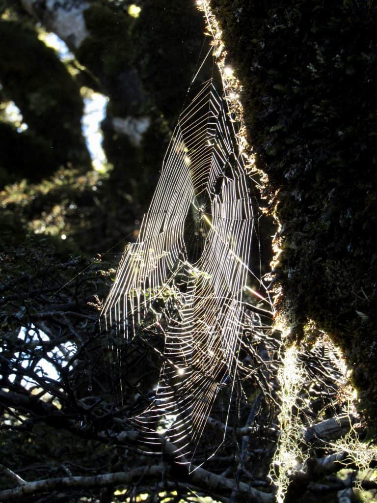 Cobweb in Taranaki Falls loop