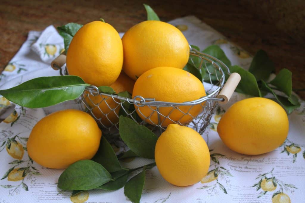 Basket of freshly picked Meyer lemons