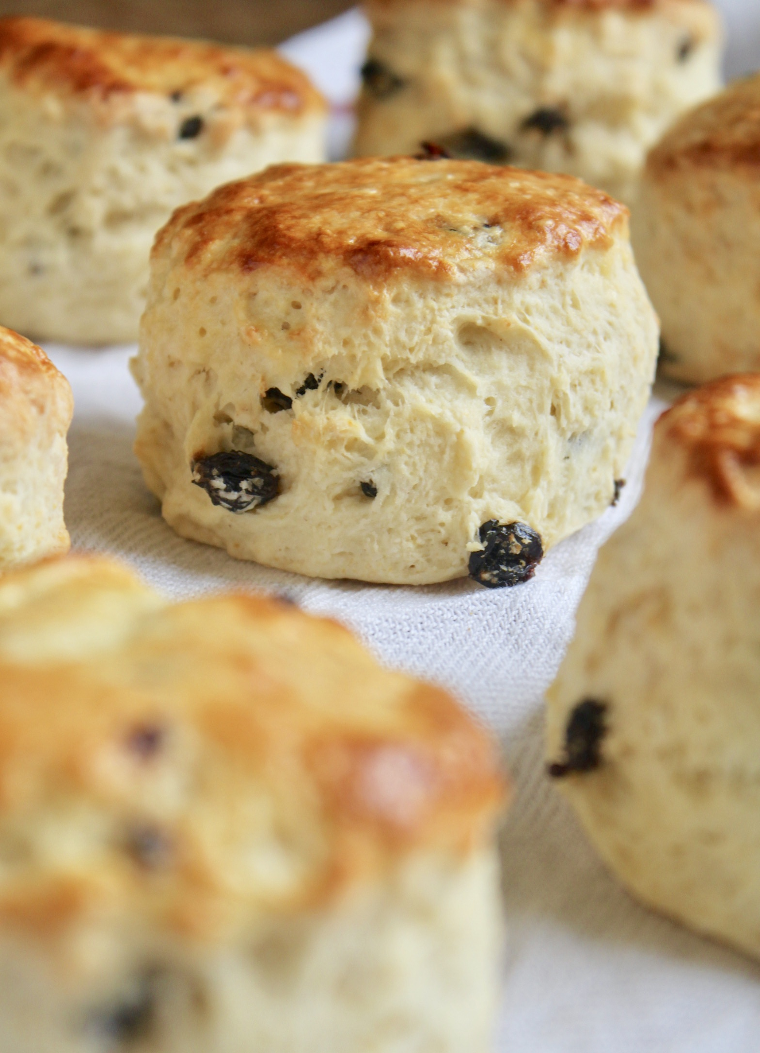 sultana or raisin scones