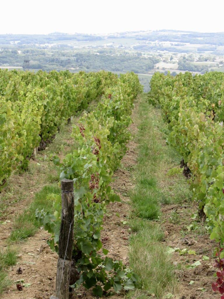Vineyard in Sarcey France (agamy)