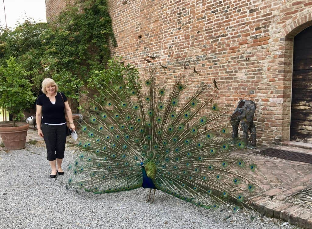 Peacock at Antica Corte Pallavicina