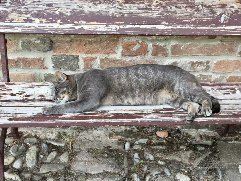 sleeping cat at Antica Corte Pallavicina