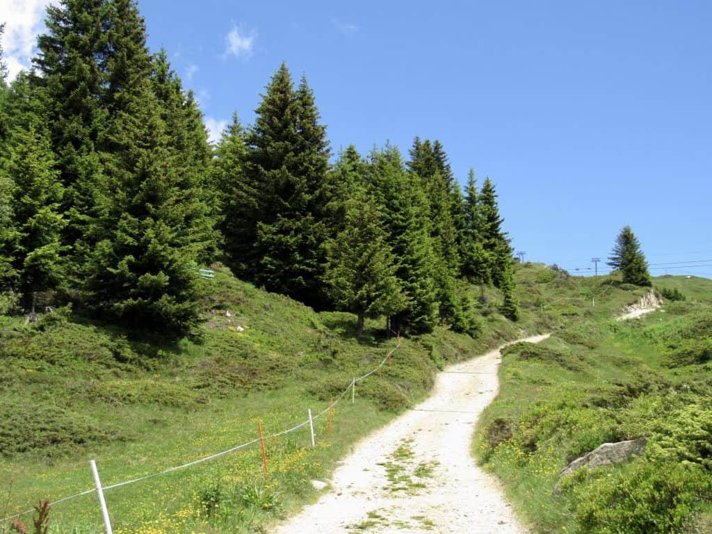 Pathway in Bettmeralp