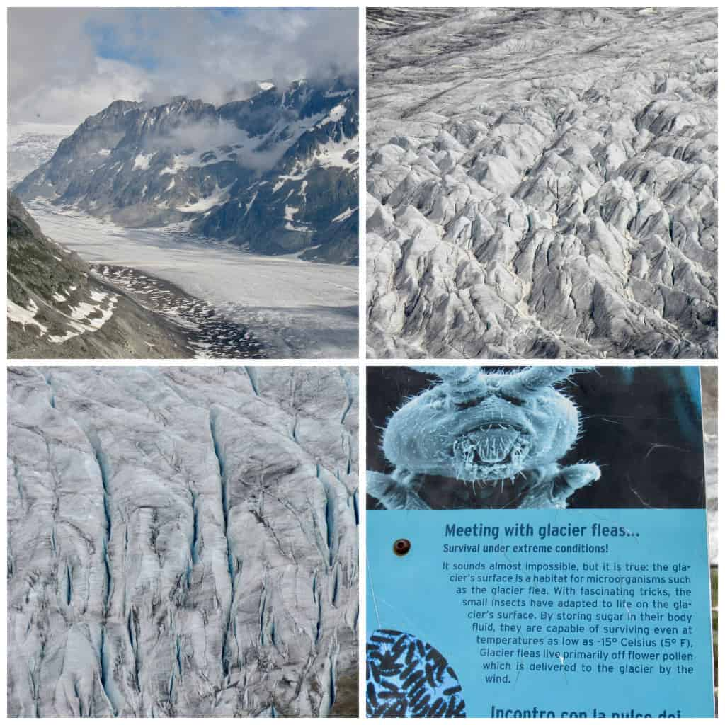 Glacier collage