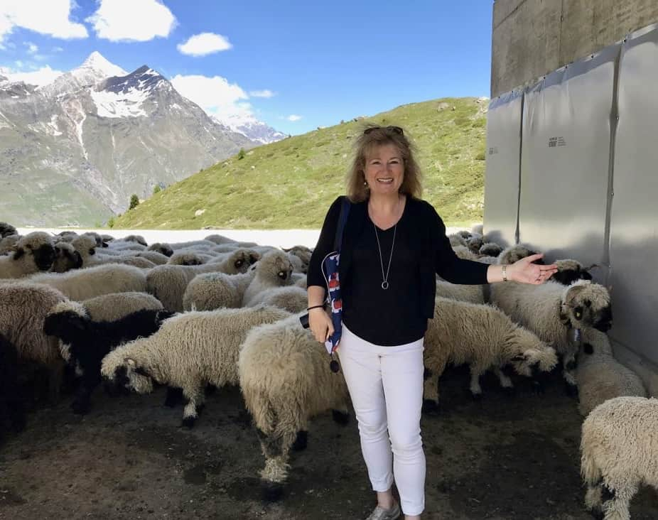 Christina's Cucina with Black Nose Valais Sheep