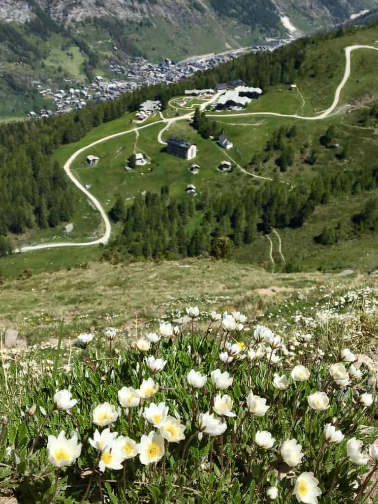 wildflowers and Zermatt