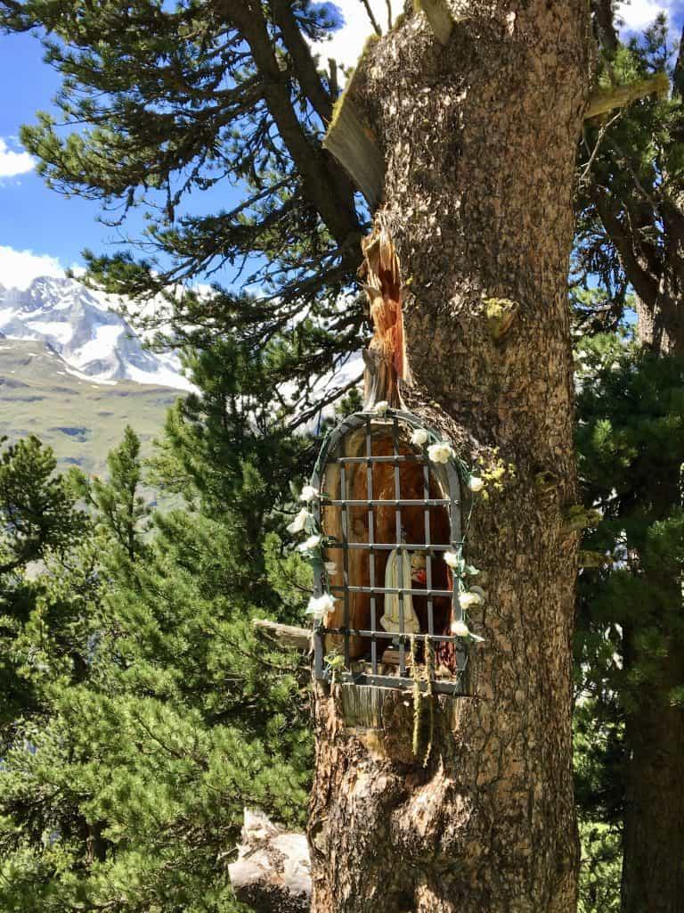 capella in a tree in Zermatt