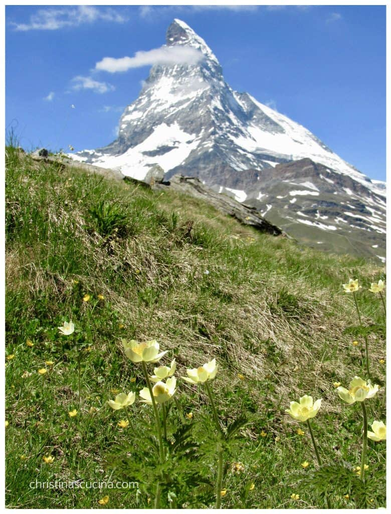 Matterhorn and wildflowers