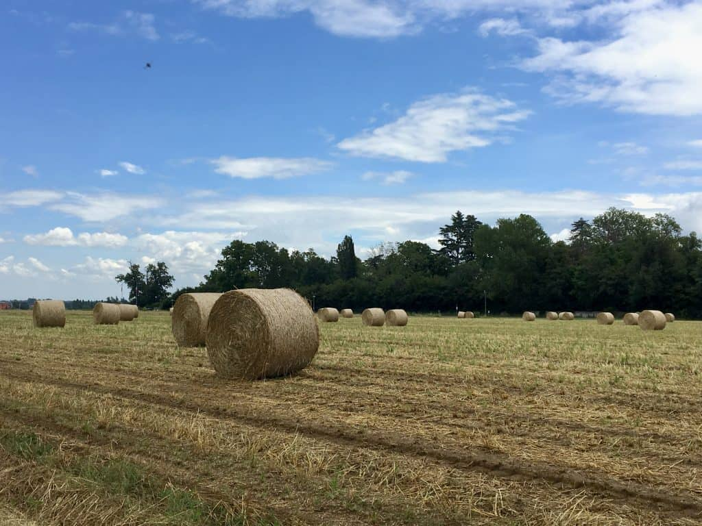 View of hay in a field
