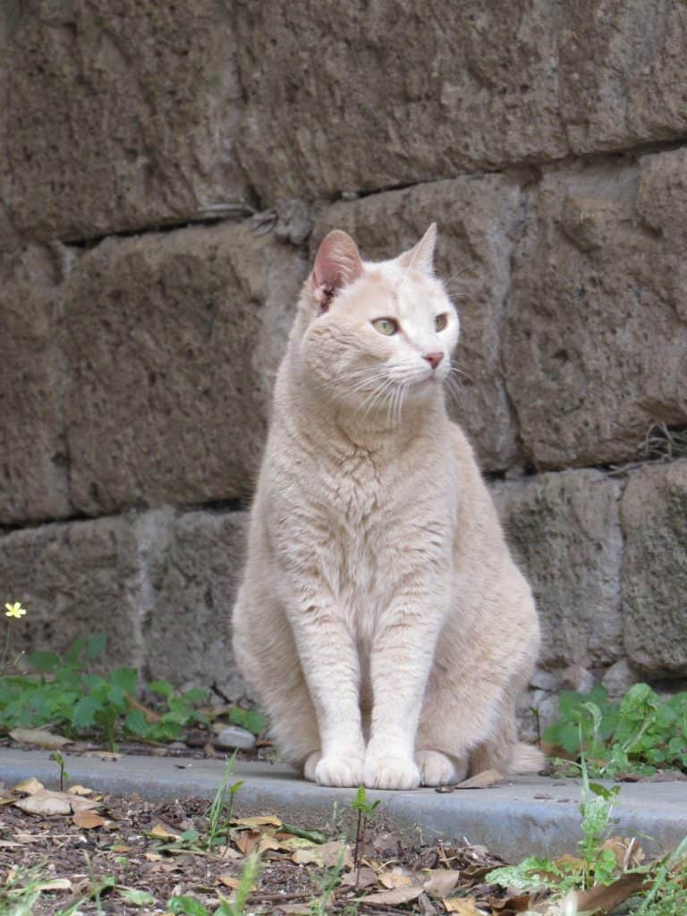 cat in Orvieto, Italy