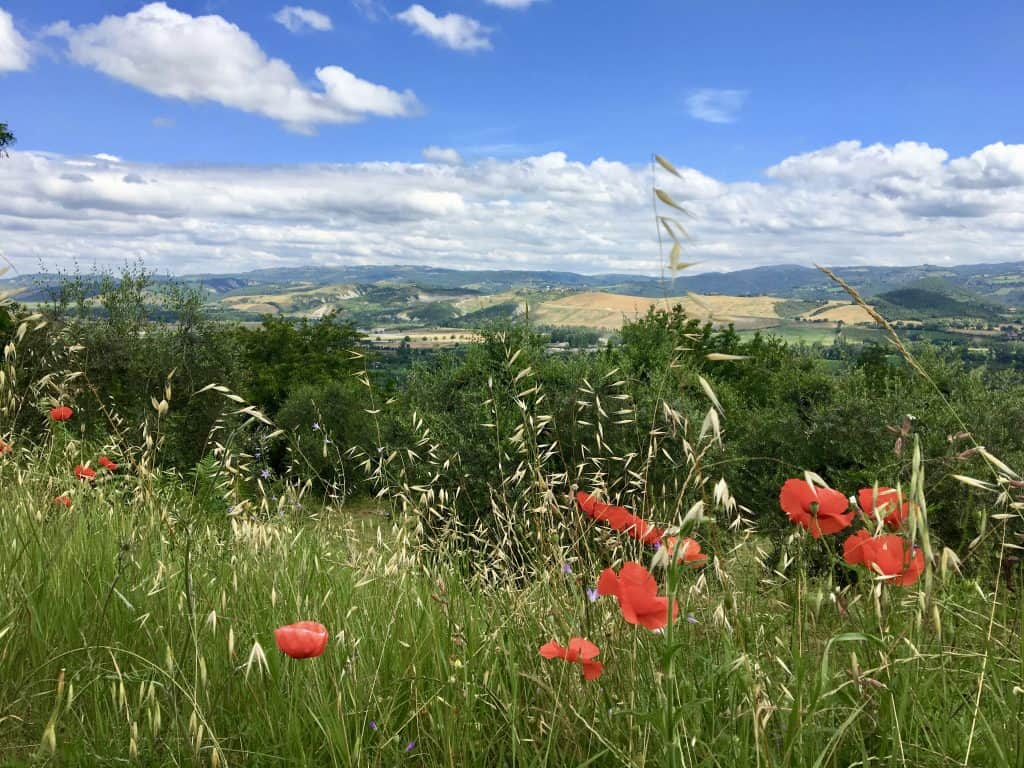 poppies and view in Orvieto, Italy