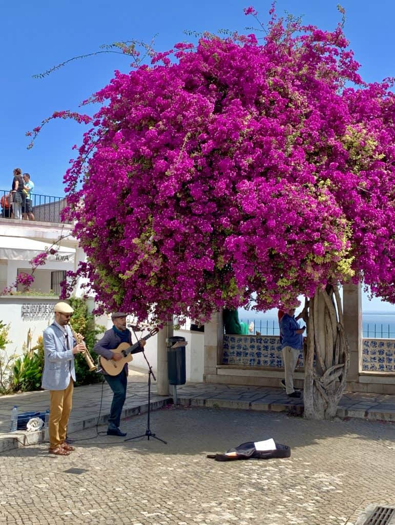 Bougainvillea in Lisbon