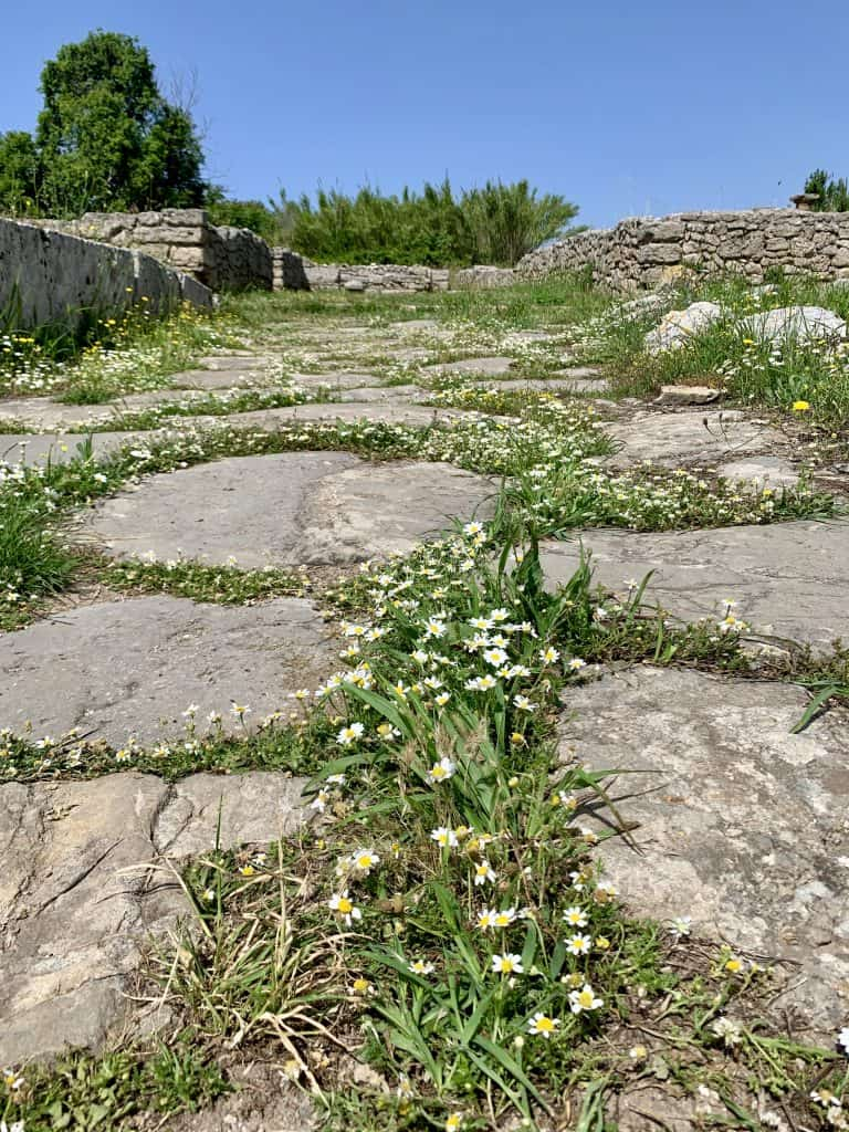 cobblestone path with flowers taken from a low angle
