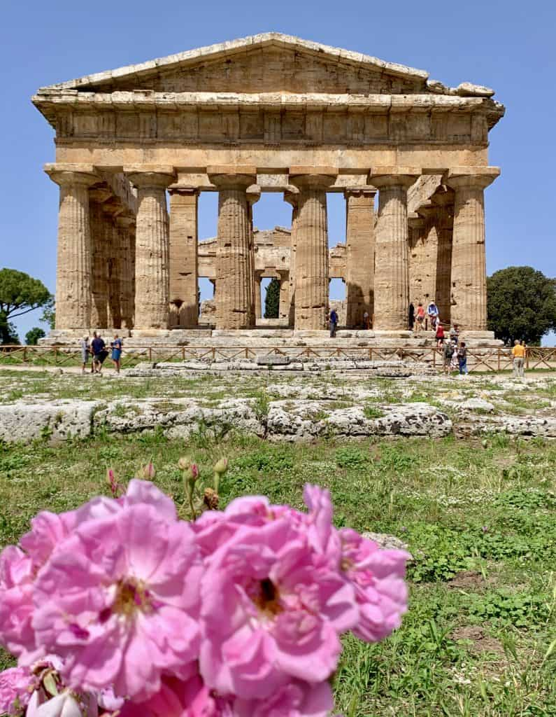 Roses and temple in Paestum (Is Paestum worth visiting)