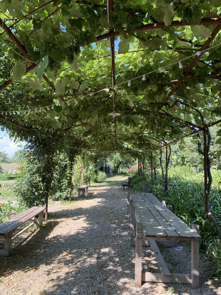 antica corte pallavicina vines