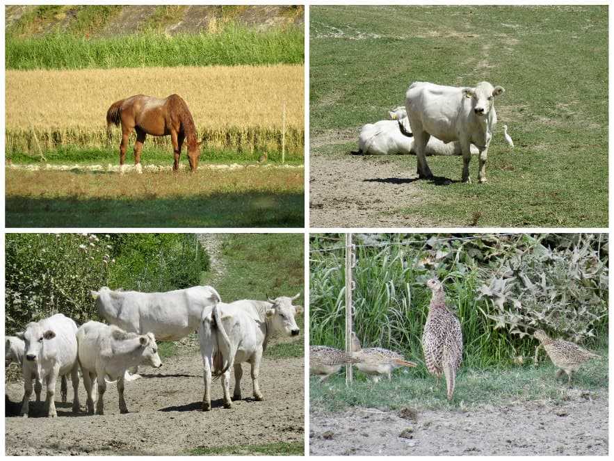 animals at antica corte pallavicina