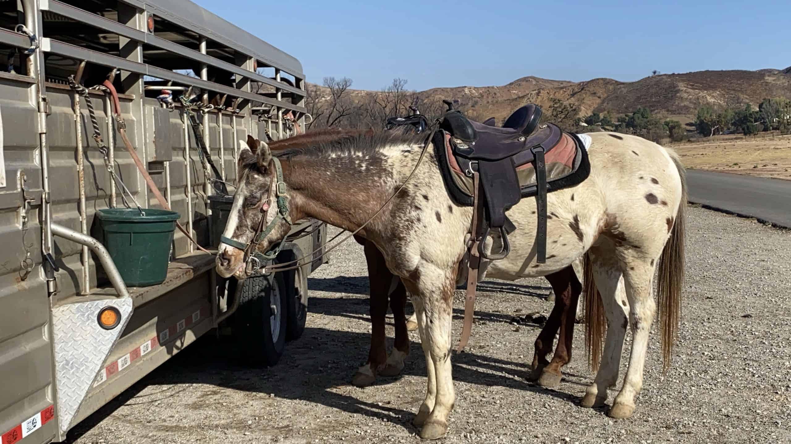 Malibu Riders