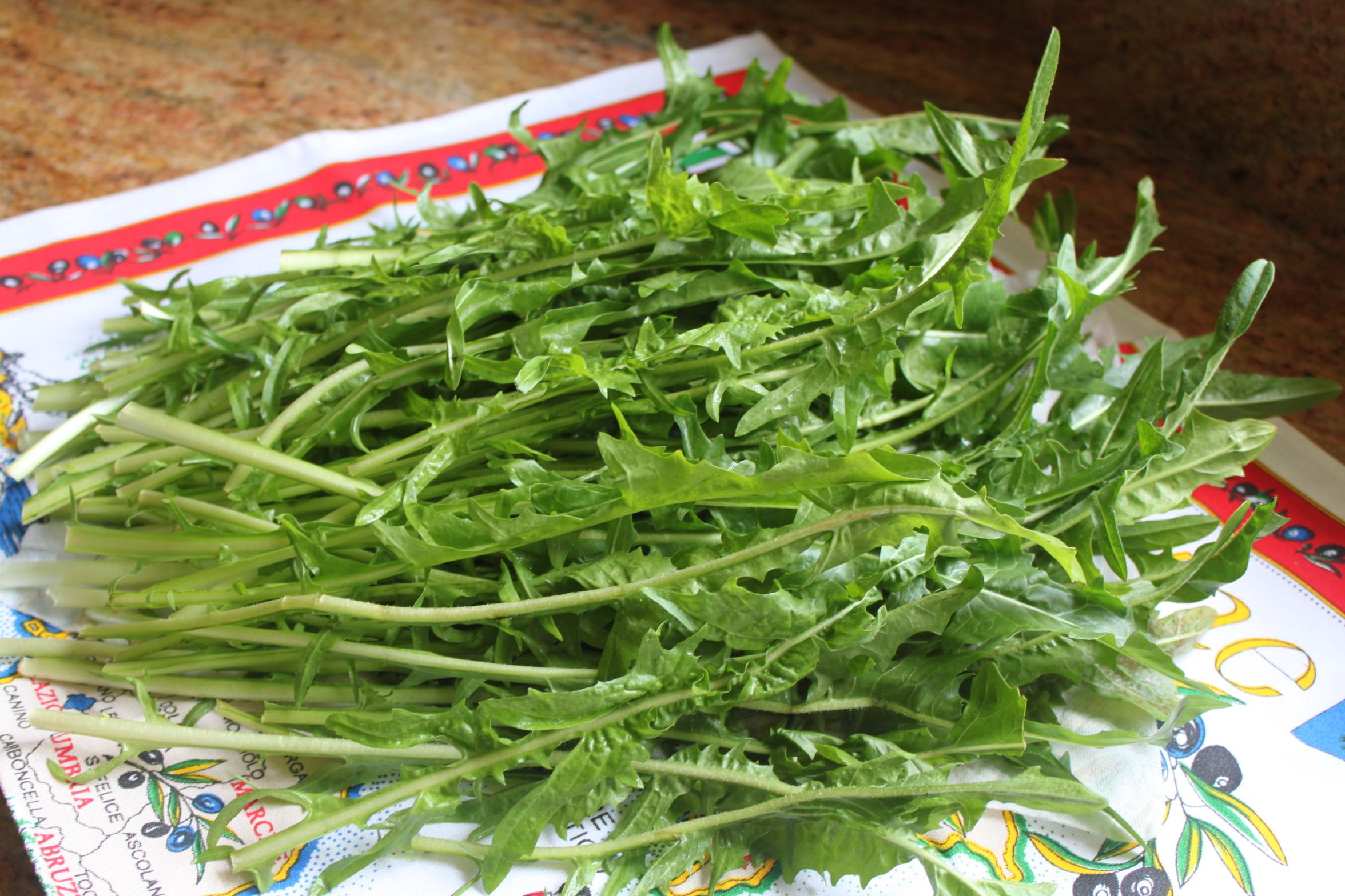 cicoria dandelion