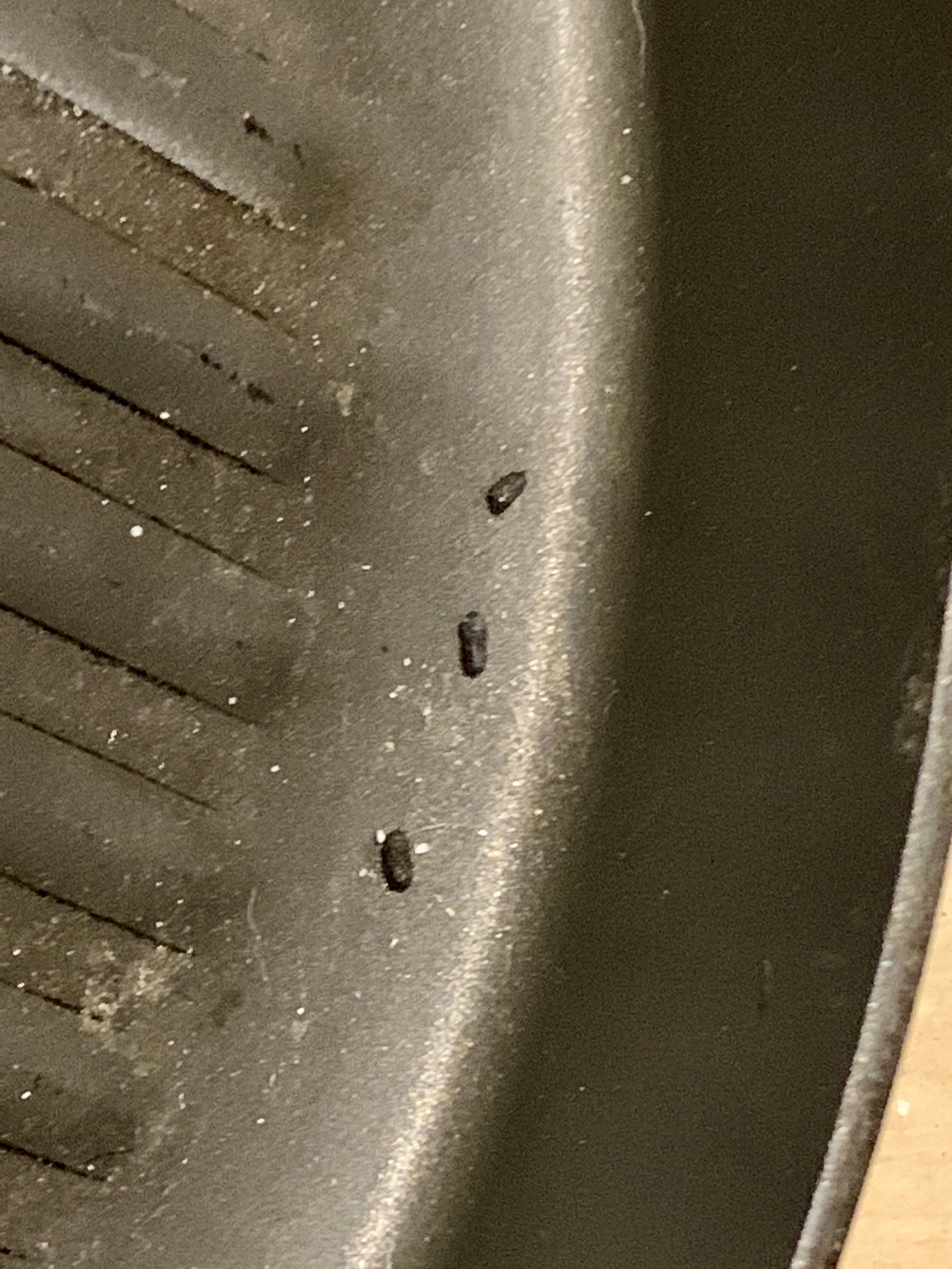 mouse poop in frying pan using airbnb