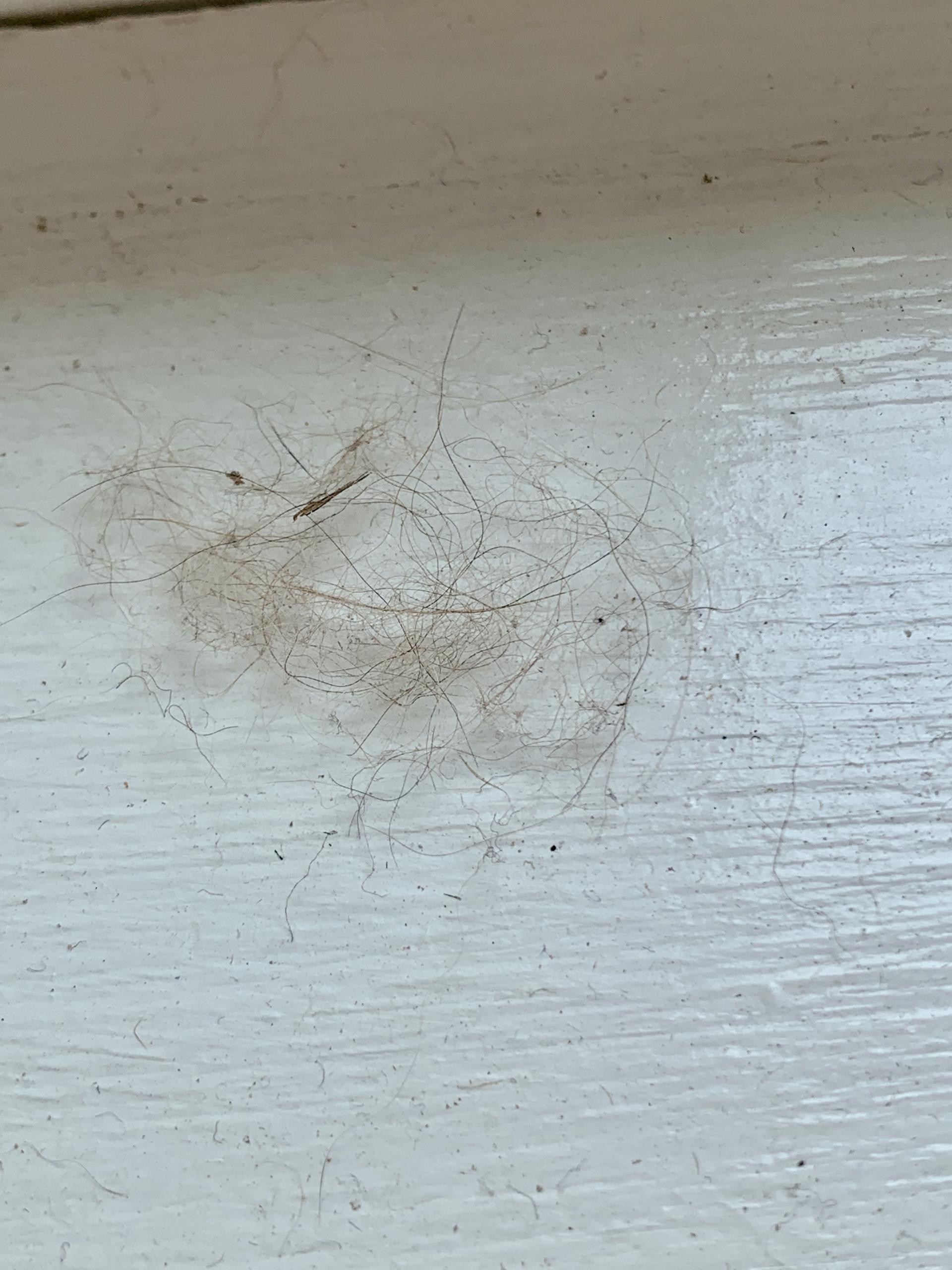 fur on a window sill using airbnb